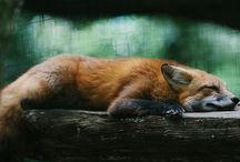 ~ animal ~ / www.laurenworsh.com