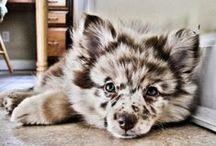 Pets I Need / by Dani Meyer
