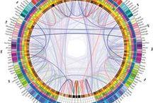 ~ infographics & visual data ~