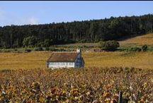 Wineyard / j like wineyard,grapes and wine