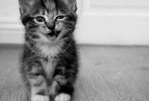 Kitty cat meow / by Savannah Kelley
