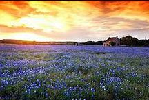 Texas / by Kady Cannon