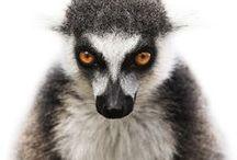 ✘ Animals / Les plus belles photographies d'animaux sauvages et d'animaux domestiques // Best photographs of wild and domestic animals
