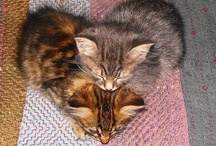 I ♥ CATS / by Kimberley Di Penta