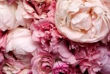 Floral / by Alexandra Fraser