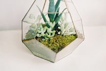 Planted / by Alexandra Fraser