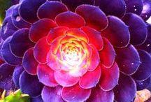 cactus  succulents  mini gardens