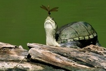 Turtle Obsession / I love turtles! Plain and simple! / by Tracy Flynn
