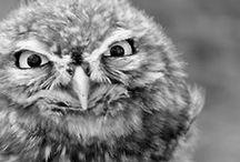 {owls!}