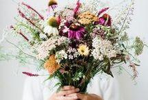 Flower power / Ne sous estimons pas le pouvoir des fleurs, rien de mieux qu'une fleur pour égayer le quotidien.