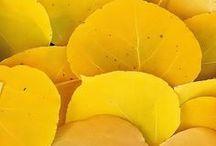 ✘ Yellow / Les plus belles photographies uniquement teintées de jaune // Best photographs exclusively yellow-coloured