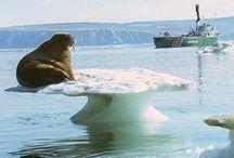 ALASKA'S ARCTIC SCENES / by Tony Soul Ojo-Ade