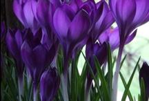 just flowers / by Shanee Uberman-painter-artist-designer