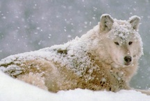 In The Wild / Wildlife / by Phyllis McLaughlin Davis