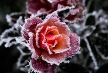Enchanted Gardens / by Leigh Janzen