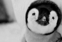 Cute Stuff - It doesn't get any cuter than this! / Just a collection of really cute stuff - mostly baby animals, cause let's face it, they are really cute!