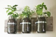 garden + sustainability
