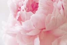 Flowers / by Chelsea Johnson