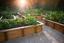 Gardening / by Ann Pinkerton