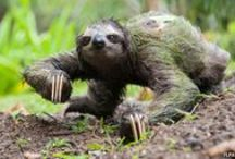 because .... sloths / sloths...