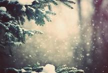 Season • Winter