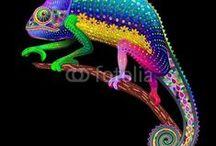 Bluedarkat's Design / by Medusa GraphicArt