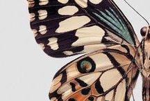 Butterflies / by Medusa GraphicArt