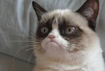 Funnies ^.^ The Grumpy Cat  / I just love that cat!!!.........
