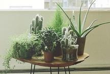 Plant//Life