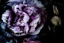 Fleurbs / Flowers / flora / fluer(b)s / pretty things / by Laura Windham
