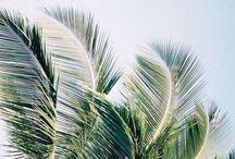 Palm.Trees.