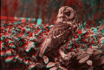 Anaglyph (3D) Pictures
