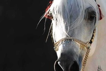 ♥ ❤ Horses...my obsession  ❤ ♥ / by Andy@Ruffles & Sweets