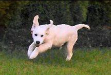 Finlay Cladan / Finlay Cladan is our new puppy born 2/25