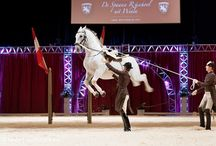 Lipizzaners: beauty in motion / The most magnificent white stallions in the world. They perform in Vienna where I was blessed to see them.