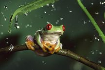Amphibians and reptiles / I love frogs of every kind, but am not fond of reptiles. However I have put them together.
