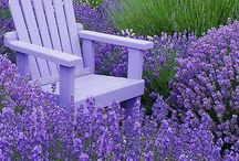 I love lavender and jasmine / The fragrance and beauty of jasmine, and the nostalgic beauty of lavender - I love them both.