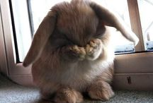 Bunny bonanza / I can't resist pictures of rabbits, so what else can I do? I have to start a board.
