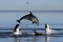 Dolphins and whales / I love seeing these wonderful animals in their natural environment.