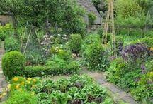Tiny garden, big dreams