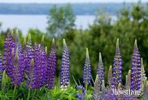 Gardens & Flowers / Books on the beautiful wildlife on Wisconsin and how tending a garden leads to a deeper understanding of nature and the land.
