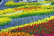 FLOWERING fields... / by Jana Jannsen