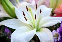 Flowers -----@ / by Lhezzza