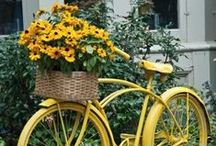 BIKEs & FLOWERs... / by Jana Jannsen