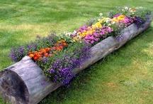 Backyard / Home Decor / Backyard Design / Plants  / by Lhezzza