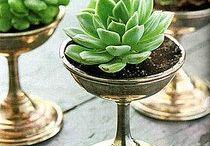 Succulents / I find succulents to be both edgy and delicate...Like me haha ;)  succulent, succulents, plant, plants