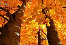 I love Fall! / by Phyllis Mote