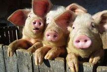 PIGs & piglets... / by Jana Jannsen