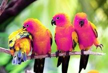 Birds / by Martha Petersen