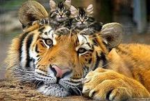 CATS!!! / by Martha Petersen